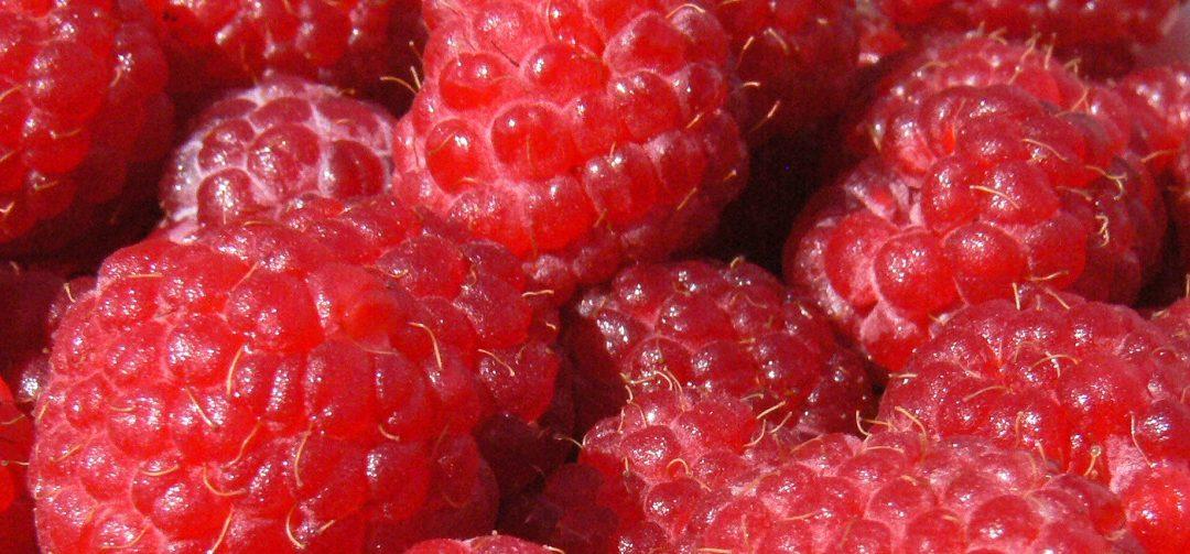 Ozone for Preserving Fruit & Vegetables